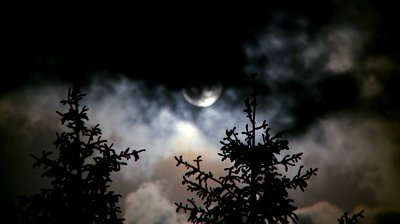 stock-footage-full-moon-and-pines-at-night