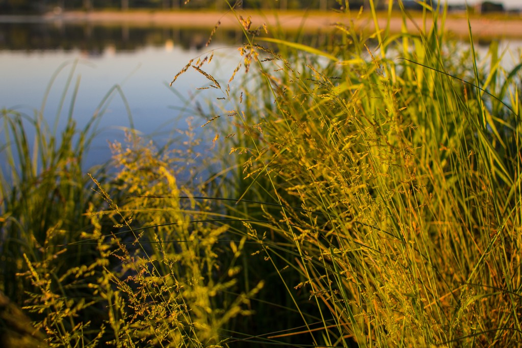 an image of the grass by the lake